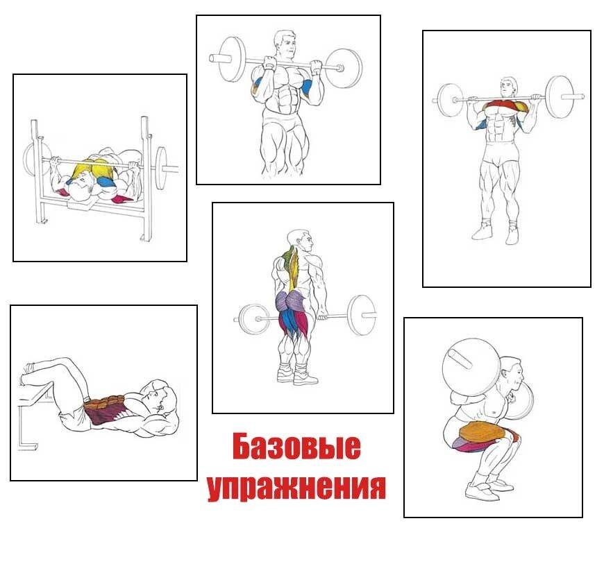 Базовые упражнения в зале